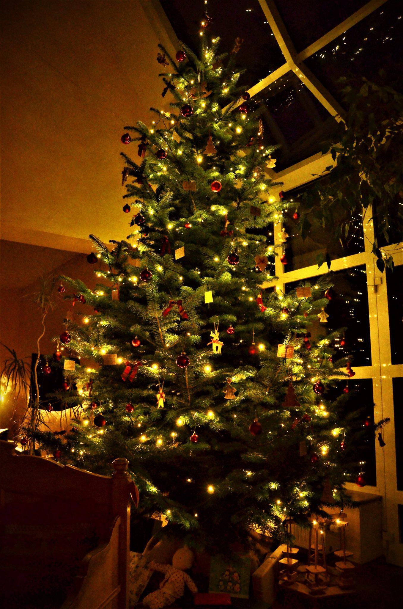 Eine wirklich wahre Weihnachts(baum)geschichte - winterberg, region, region-wi-me-ha, medebach, hallenberg