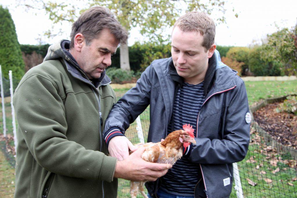 Ein Herz für Hennen