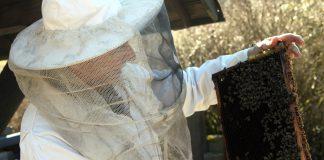 Imker, Bienen