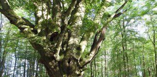 Naturdenkmäler im Kreis Olpe